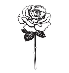 black and white rose flower with leaves and stem vector image