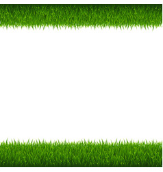 green grass borders white background vector image