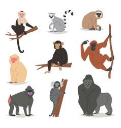 monkey set cute animal macaque monkeyish vector image vector image