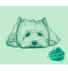 Dog on a green background vector image