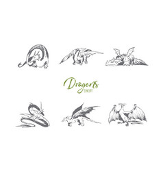dragons - different types of dragons vector image