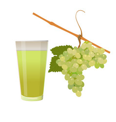grape and glass of juice vector image