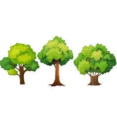 Set of different tree design vector