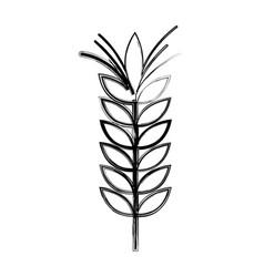 figure healthy wheat organ plant nutricious vector image