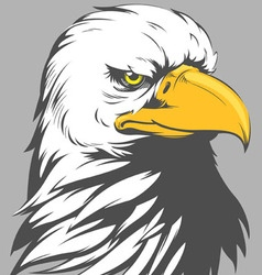 Bald Eagle Head Cartoon vector image
