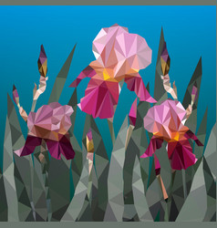 with beautiful purple iris vector image