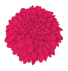 Beautiful flower dahlia isolated on white vector