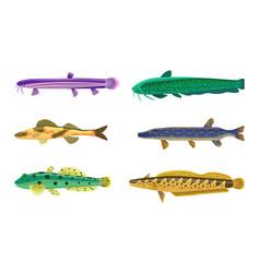 Brook trout fish fauna set vector