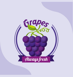 fruit bunch grapes always fresh emblem vector image