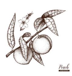 Peach vintage sketch vector