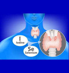 Selenium and iodine vector