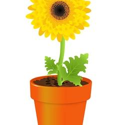 Daisy In Pot vector image