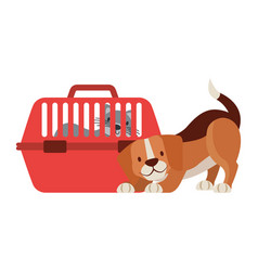 beagle dog and cat on cage vector image
