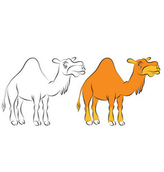 Chewing orange camel with one hump vector