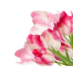 Fresh spring tulip flowers on white EPS 10 vector image vector image