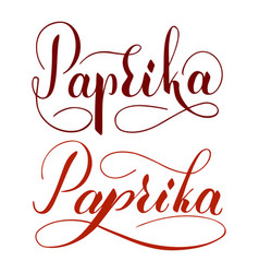 Hand written paprika text isolated on white vector