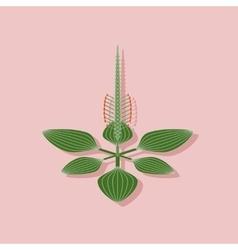 Paper sticker on stylish background plant plantago vector