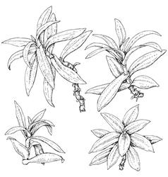 doodle tradescantia vector image vector image