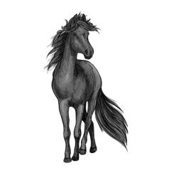 Walking black horse sketch portrait vector image