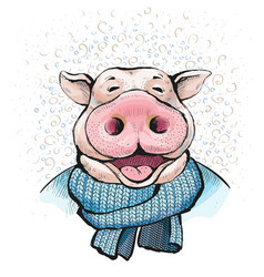 Boar wrapped in a knitted scarf blue color vector