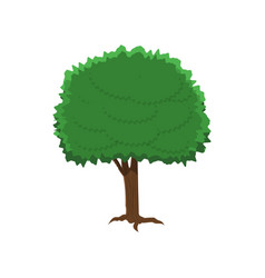 Chestnut tree in flat style isolated on white vector