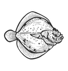 flounder flatfish plaice fish sketch vector image