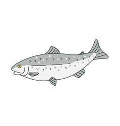 Grey trout fish drawing isolated on white vector