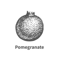 hand-drawn pomegranate vector image