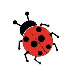 Ladybug isolated on white vector image
