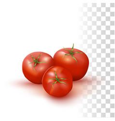 red fresh tomato vector image