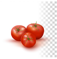 red fresh tomatos vector image