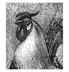 rooster head vintage vector image