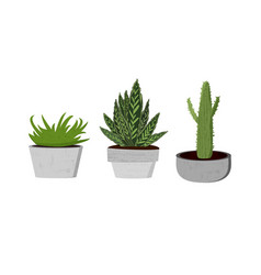 set of succulents vector image