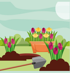 potted tulips planting flowers shovel gardening vector image