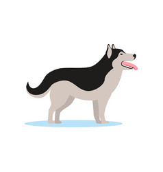 Siberian husky dog side view vector