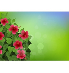 tropical flower background vector image vector image