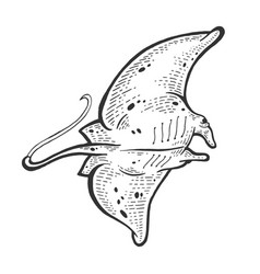 Batoidea stingray sea animal engraving vector