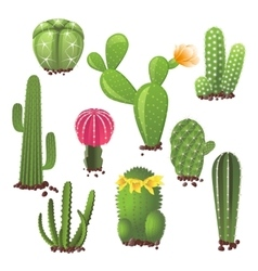 Different types of cactuses vector