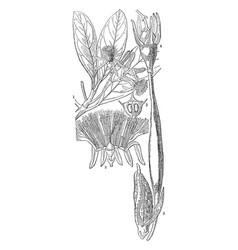 Mangrove vintage vector