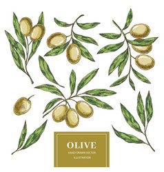 Olive elements collection vector