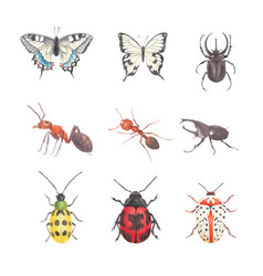 Set watercolor beetle bug butterfly ant vector