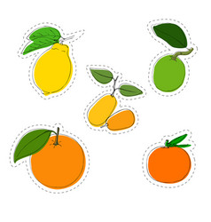 Color sticker set of citrus fruit lemon vector