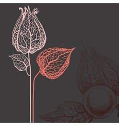 flowers over dark background vector image
