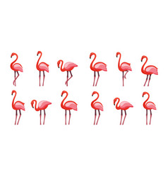 pink flamingo set isolated on vector image
