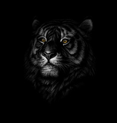 portrait a tiger head on a black background vector image