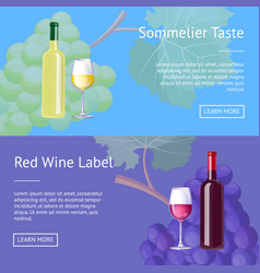 Sommelier taste red wine label set of web posters vector