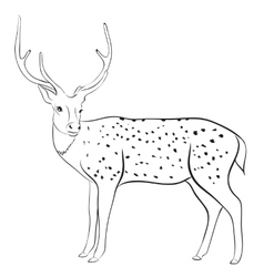 deer vector image