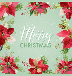 christmas winter poinsettia flowers card vector image vector image