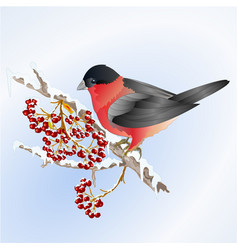 bird bullfinch small songbirdon on on snowy tree vector image