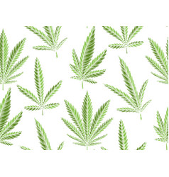 Seamless texture green leaves marijuana on a vector
